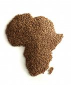 The Hungry Continent