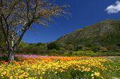 Frühling In Kirstenbosch