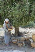 Cosecha de la oliva