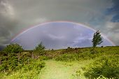 Rainbow In Stromy Sky Above Landscape Of Foxgloves