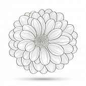 Hand-drawn flower chrysanthemum. Element for design. Abstract floral background.