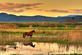 Pferd in Landschaft