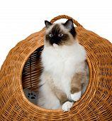 Cat Cute