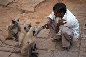 Man Feeding Monkeys