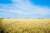 Field And Wind Turbine