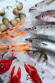 stock photo of hake  - Seabass mackerel hake fish nephrops crabs and clams seafood - JPG