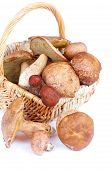 picture of bolete  - Heap of Raw Ripe Porcini Mushrooms Orange - JPG