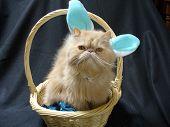 Cat Bunny
