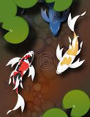 Three butterfly koi fish