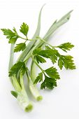 stock photo of green onion  - green onions and parsley  - JPG