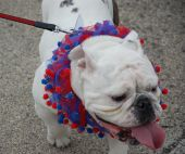 Lagrange Pet Parade Vii