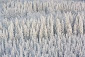Winter Forest In Finland