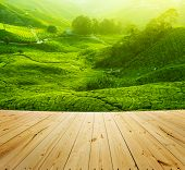 Tea Plantations at Cameron Highlands Malaysia, wood floor perspective. Sunrise in early morning with