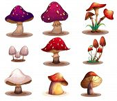 Illustration of the different kinds of mushrooms on a white background