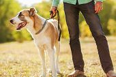 stock photo of shepherd  - Man and central Asian shepherd walk in the park - JPG