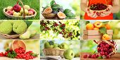 stock photo of barberry  - Collage of garden fruits and berries - JPG