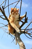 pic of willow  - Ginger cat sitting on a willow - JPG