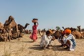 PUSHKAR, INDIA - NOVEMBER 20, 2012: Indian people and camels at Pushkar camel fair (Pushkar Mela) -