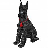 Vector Black Giant Schnauzer Dog Sitting