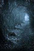 stock photo of spooky  - Dark spooky passage through the forest toned blue - JPG