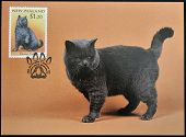 stamp printed in New Zealand shows Domestic Cat British Black