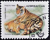 A stamp printed in Azerbaijan shows panthera tigris virgata