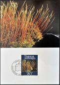 stamp printed in Liechtenstein dedicated to mosses and lichens shows Amblytegium serpens