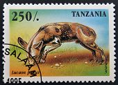 A stamp printed in Tanzania shows Lycaon pictus
