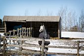 pic of blanket snow  - Horses in their corral in wintertime wearing blankets for warmth - JPG