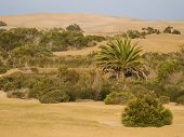 Canarian Desert
