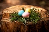 easter eggs lying on stump