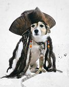 Vintage Pirate Dog
