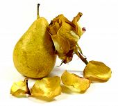 pear with wilting rose