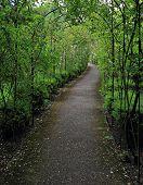 Pathway In Rose Garden