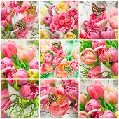 Pink Tulip Flowers And Beautiful Butterflies