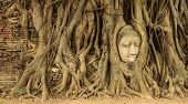 Buddha head in the tree roots.