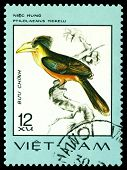 Vintage  Postage Stamp. Bird Ptilolaemus Tickelli.