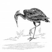 Heron Bird Vintage Engraving Vector