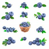 Blueberries Collection