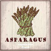 Fresh vegetables sketch background. Vintage hand drawing illustration of a asparagus