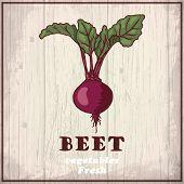 Fresh vegetables sketch background. Vintage hand drawing illustration of a beet