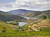 Beautifu Landscape In The Douro Region