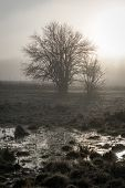 Silhouette Bush Sunrise
