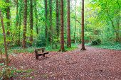 Empty Bench In A Forest