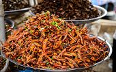 stock photo of locusts  - Fried Locusts  - JPG