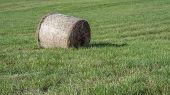 Pressed Hay