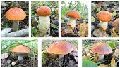 Set Of Mushrooms.