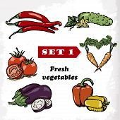 Set 1 Fresh Vegetables Of Tomato, Eggplant, Pepper, Cucumber, Carrots And Hot Peppers. Vector Illust