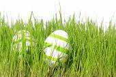 Easter Eggs Green