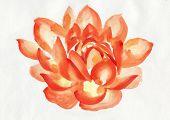 Orange Lotus Flower Watercolor Painting
